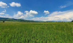 Низкие цены и теплый прием: почему туристам надо рекомендовать Болгарию