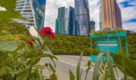 Сады «Цветочного джема»: три маршрута для идеальной летней прогулки